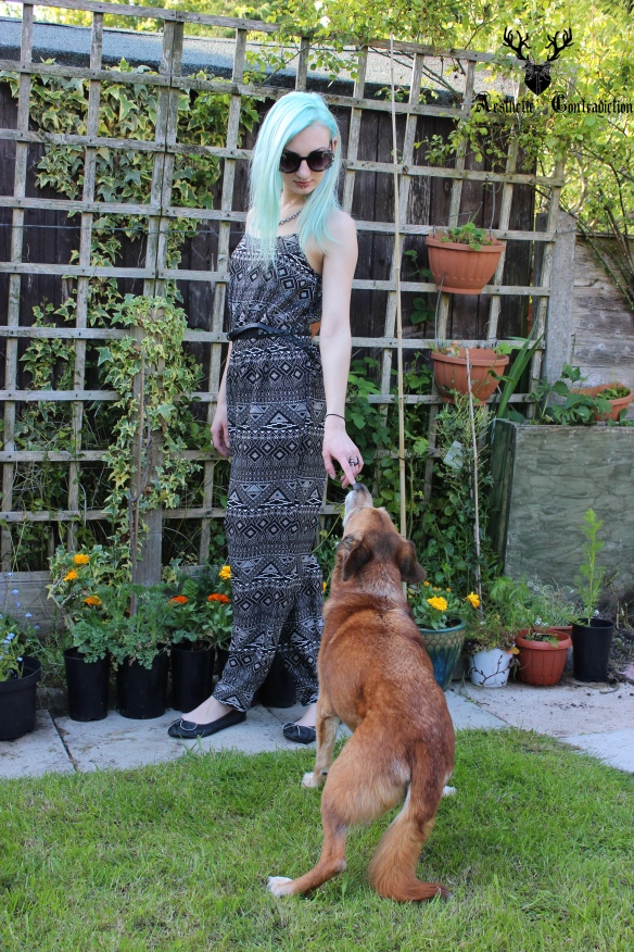 blue haired fashion blogger with dog